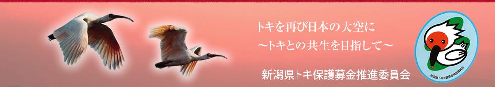 トキを再び日本の大空に~朱鷺と共存できる島へ~